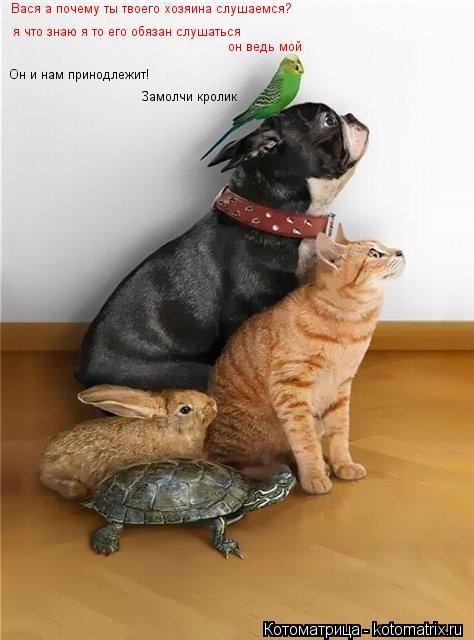 Котоматрица: Вася а почему ты твоего хозяина слушаемся? я что знаю я то его обязан слушаться он ведь мой Он и нам принодлежит! Замолчи кролик