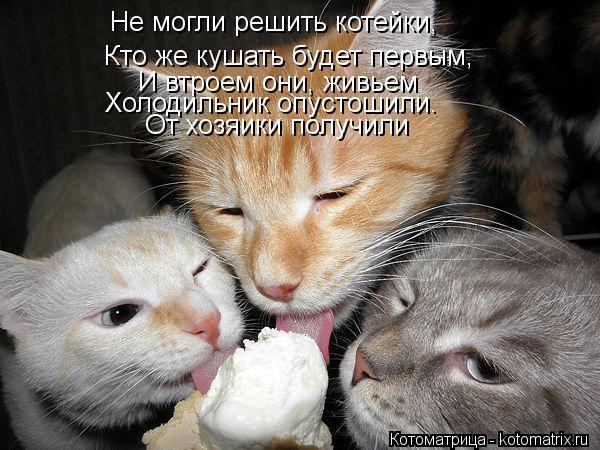 Котоматрица: Не могли решить котейки, Кто же кушать будет первым, И втроем они, живьем Холодильник опустошили. От хозяики получили
