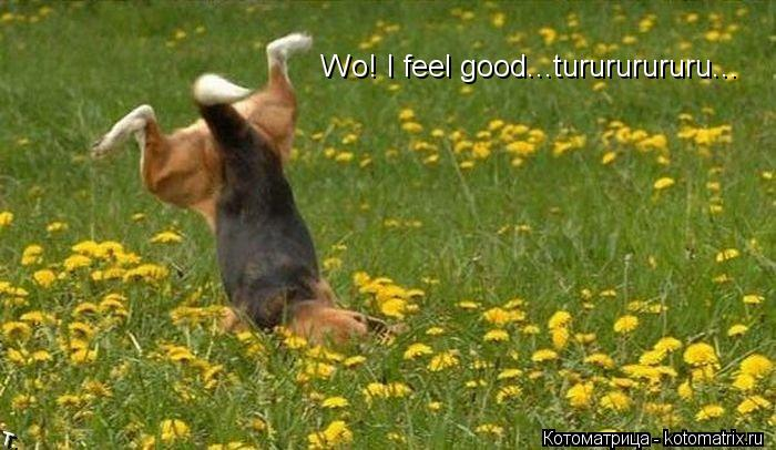 Котоматрица: Wo! I feel good...turururururu...