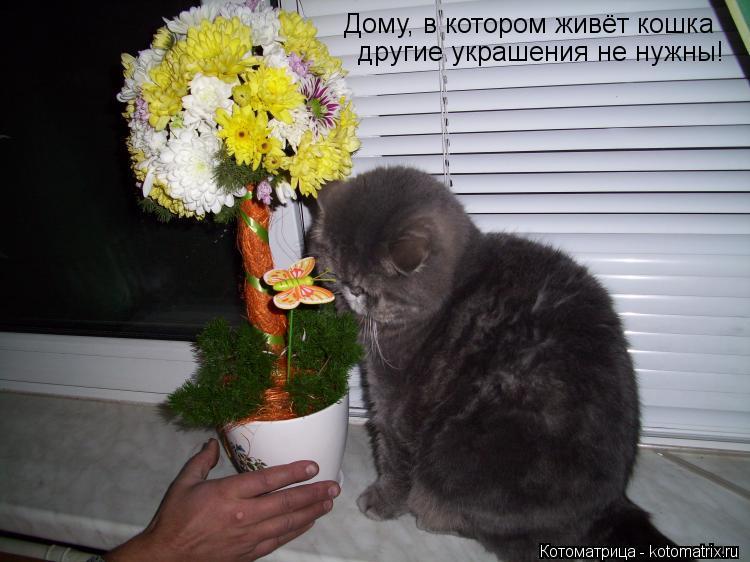 Котоматрица: Дому, в котором живёт кошка другие украшения не нужны!