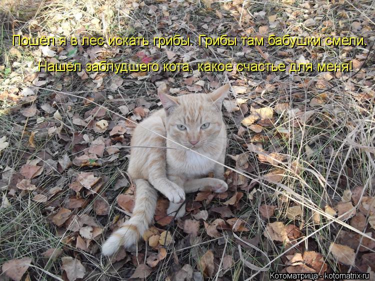 Котоматрица: Пошёл я в лес искать грибы. Грибы там бабушки смели.  Нашёл заблудшего кота, какое счастье для меня!