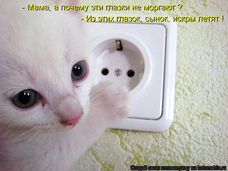 Котоматрица: - Мама, а почему эти глазки не моргают ? - Из этих глазок, сынок, искры летят !