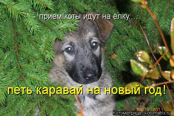Котоматрица: прием!коты идут на ёлку.... петь каравай на новый год!