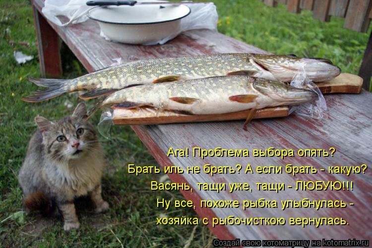 Котоматрица: Брать иль не брать? А если брать - какую? Васянь, тащи уже, тащи - ЛЮБУЮ!!! Ну все, похоже рыбка улыбнулась -  хозяйка с рыбочисткою вернулась. Аг