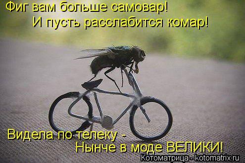 Котоматрица: Фиг вам больше самовар! Видела по телеку -  Нынче в моде ВЕЛИКИ! И пусть расслабится комар!