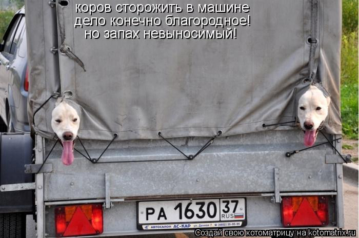 Котоматрица: коров сторожить в машине  дело конечно благородное!  но запах невыносимый!