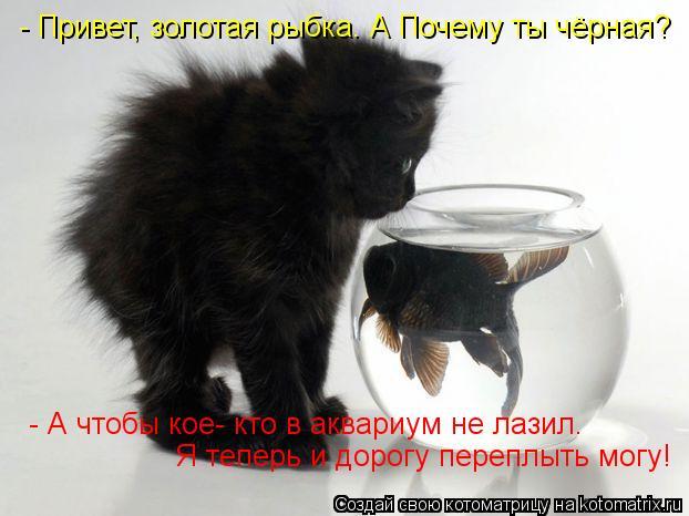 Котоматрица: - Привет, золотая рыбка. А Почему ты чёрная?  - А чтобы кое- кто в аквариум не лазил. Я теперь и дорогу переплыть могу!