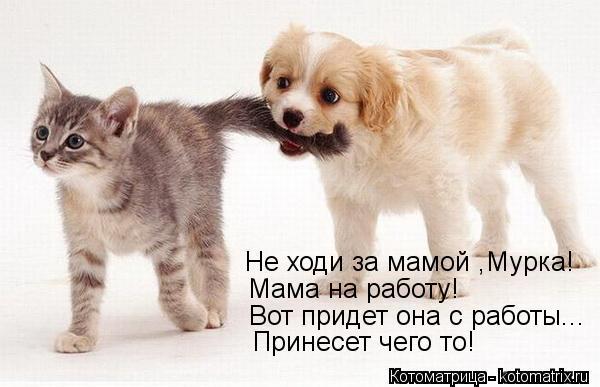 Котоматрица: Не ходи за мамой ,Мурка! Мама на работу! Вот придет она с работы... Принесет чего то!