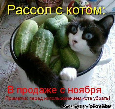 Котоматрица: Рассол с котом: В продаже с ноября Приметка: перед использованием кота убрать!