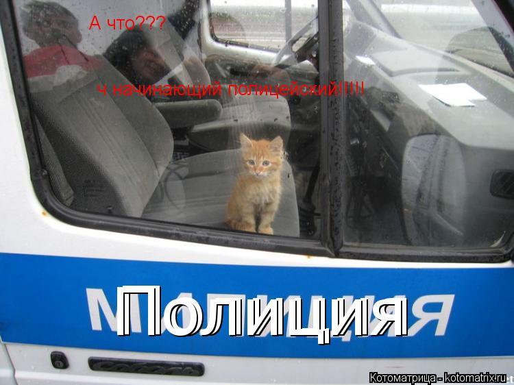 Котоматрица: А что??? ч начинающий полицейский!!!!! Полиция Полиция Полиция