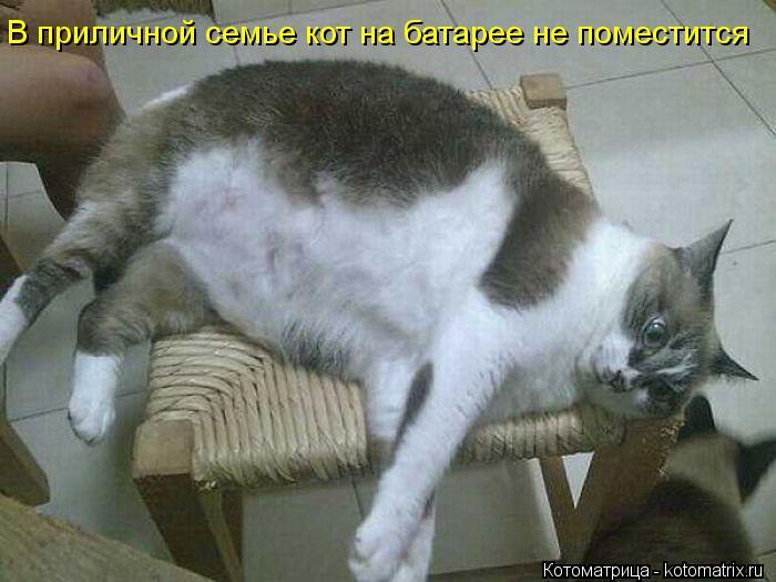 Котоматрица: В приличной семье кот на батарее не поместится