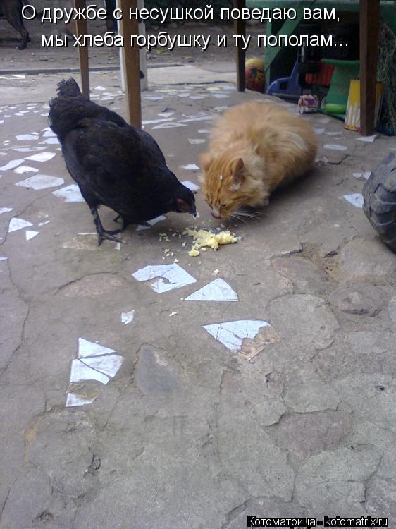 Котоматрица: О дружбе с несушкой поведаю вам, мы хлеба горбушку и ту пополам...