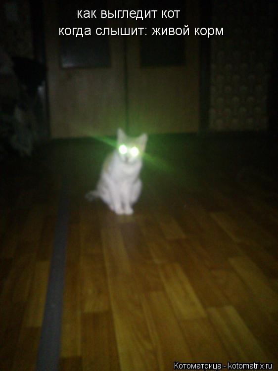 Котоматрица: как выгледит кот    когда слышит: живой корм