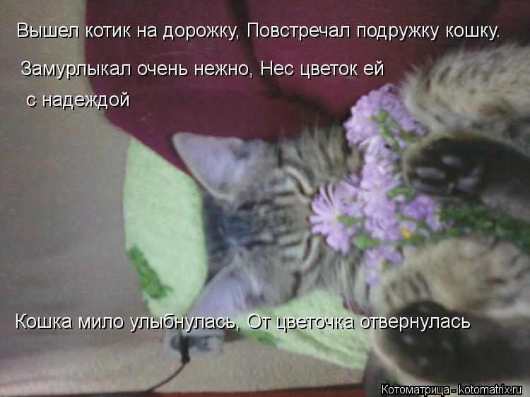 Котоматрица: Вышел котик на дорожку, Повстречал подружку кошку.  Замурлыкал очень нежно, Нес цветок ей  с надеждой Кошка мило улыбнулась, От цветочка отв