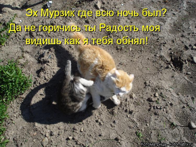 Котоматрица: Эх Мурзик где всю ночь был? Да не горичись ты Радость моя видишь как я тебя обнял!
