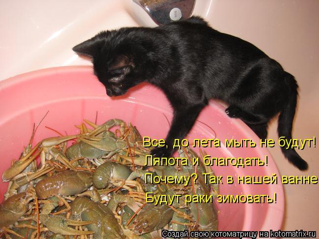 Котоматрица: Все, до лета мыть не будут! Ляпота и благодать! Почему? Так в нашей ванне Будут раки зимовать!