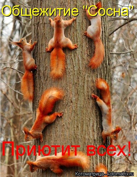 """Котоматрица: Общежитие """"Сосна"""" Приютит всех!"""