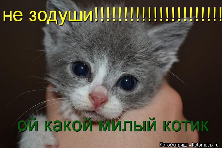 Котоматрица: не зодуши!!!!!!!!!!!!!!!!!!!!!!!!  ой какой милый котик