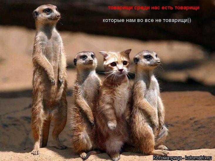 Котоматрица: товарищи среди нас есть товарищи которые нам во все не товарищи!!! товарищи среди нас есть товарищи  которые нам во все не товарищи))