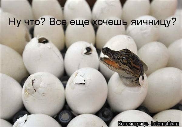 Котоматрица: Ну что? Все еще хочешь яичницу?