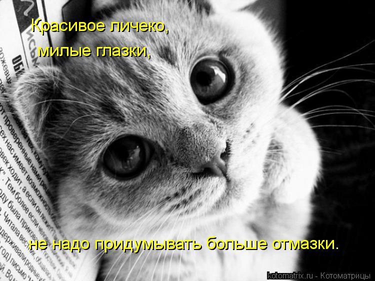 Котоматрица: Красивое личеко, милые глазки, не надо придумывать больше отмазки.