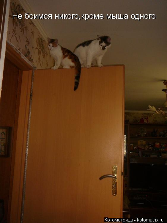 Котоматрица: Не боимся никого,кроме мыша одного