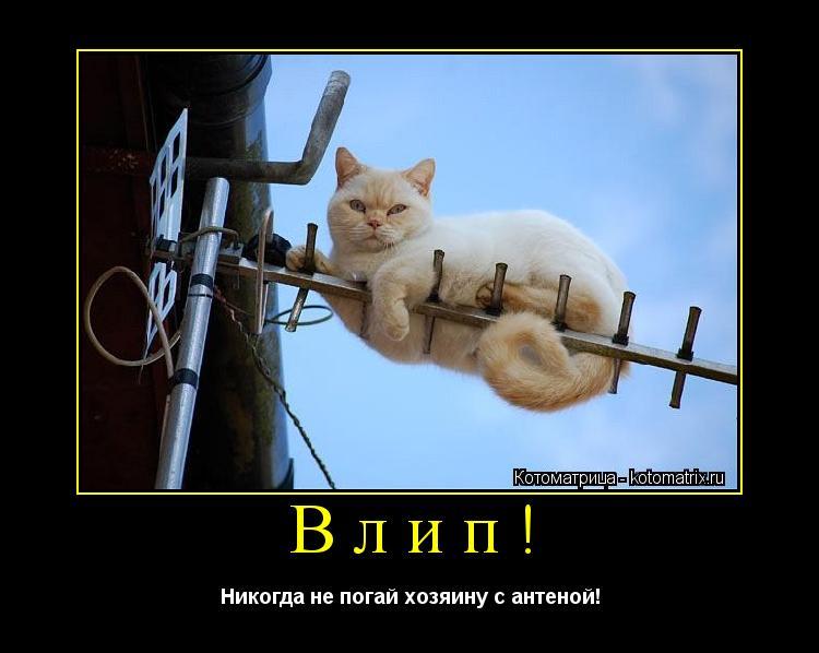 Котоматрица: Влип! Никогда не погай хозяину с антеной!