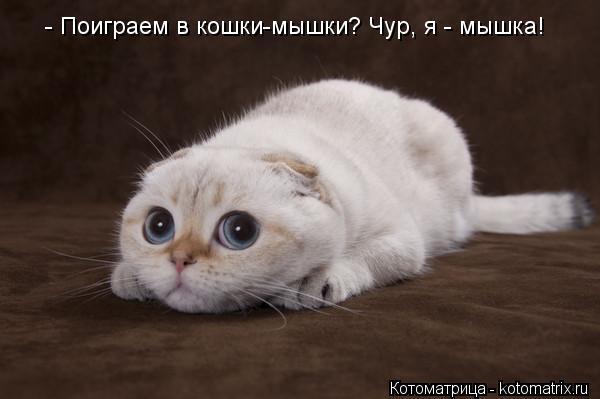 Котоматрица: - Поиграем в кошки-мышки? Чур, я - мышка!