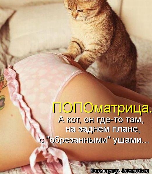 """Котоматрица: ПОПОматрица. А кот, он где-то там,  на заднем плане,  с """"обрезанными"""" ушами..."""