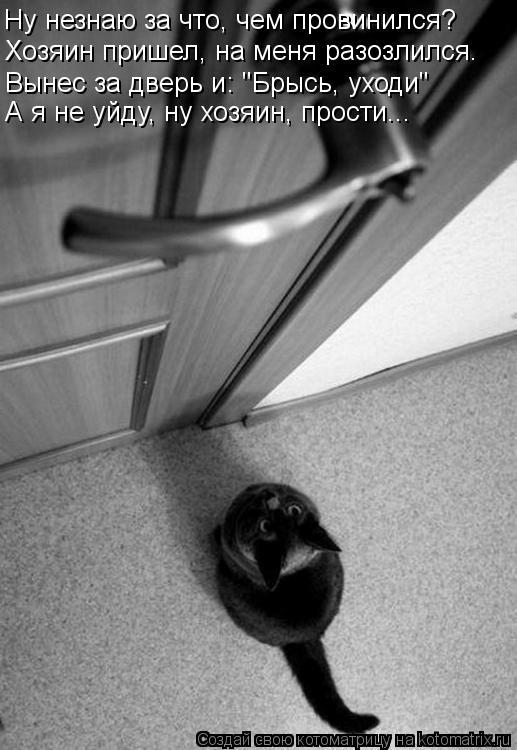 """Котоматрица: Ну незнаю за что, чем провинился? Хозяин пришел, на меня разозлился. А я не уйду, ну хозяин, прости... Вынес за дверь и: """"Брысь, уходи"""""""