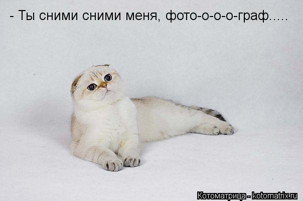 Котоматрица: - Ты сними сними меня, фото-о-о-о-граф.....