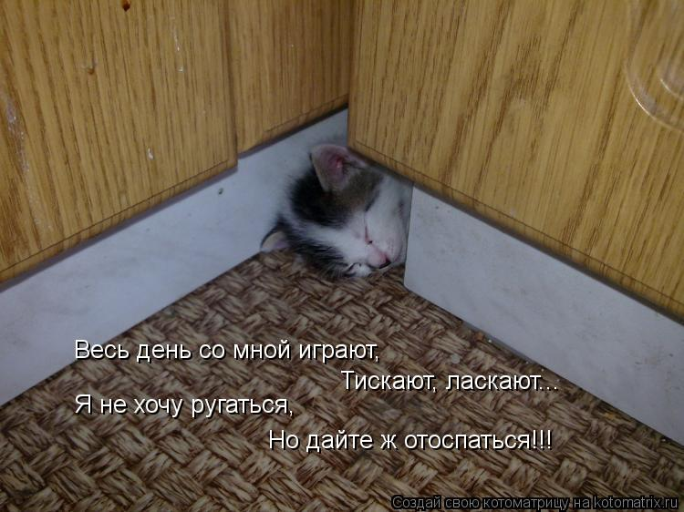 Котоматрица: Весь день со мной играют, Тискают, ласкают... Я не хочу ругаться, Но дайте ж отоспаться!!!
