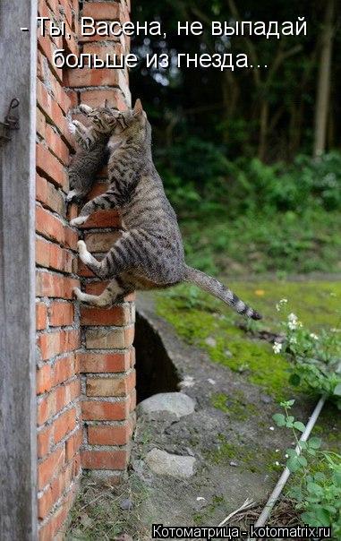Котоматрица: - Ты, Васена, не выпадай больше из гнезда...