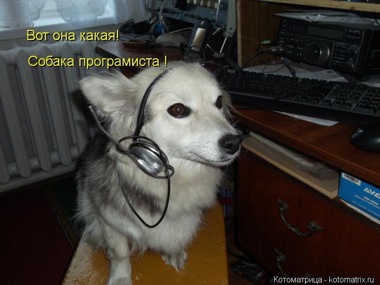 Котоматрица: Вот она какая! Собака програмиста !