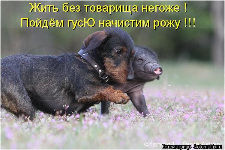 Котоматрица: Жить без товарища негоже ! Пойдём гусЮ начистим рожу !!!