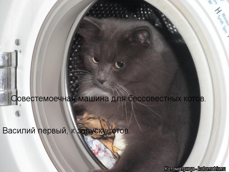 Котоматрица: Совестемоечная машина для бессовестных котов. Василий первый, к запуску готов.