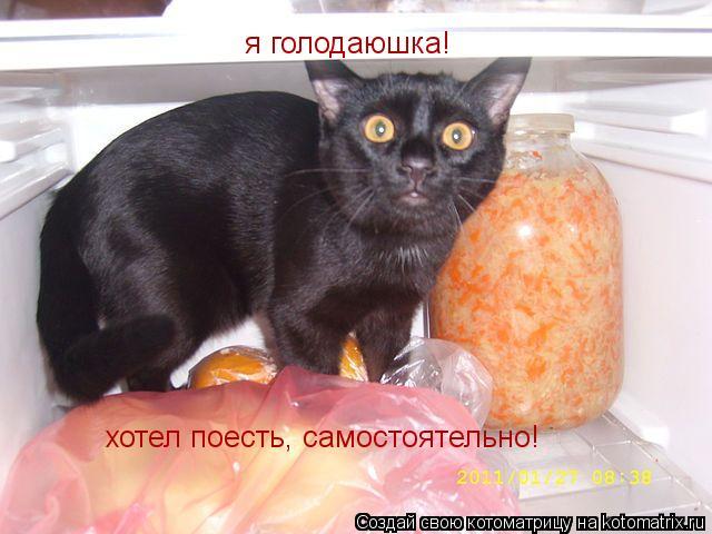Котоматрица: я голодаюшка! хотел поесть, самостоятельно!