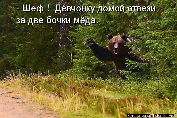 Котоматрица: - Шеф !  Девчонку домой отвези за две бочки мёда.