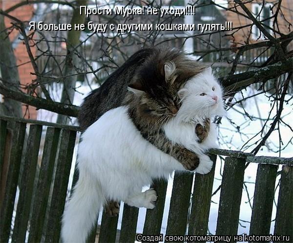 Котоматрица: Прости Мурка! не уходи!!!! Я больше не буду с другими кошками гулять!!!