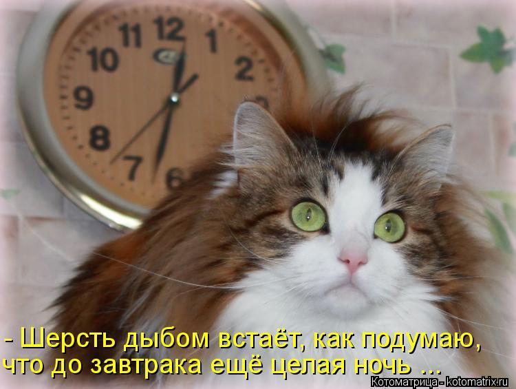 Котоматрица: - Шерсть дыбом встаёт, как подумаю, что до завтрака ещё целая ночь ...