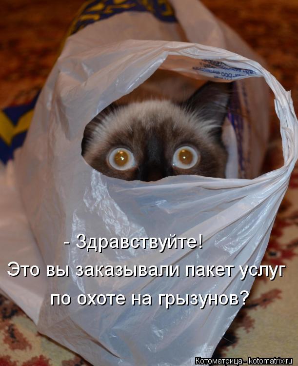 Котоматрица: - Здравствуйте! Это вы заказывали пакет услуг по охоте на грызунов?