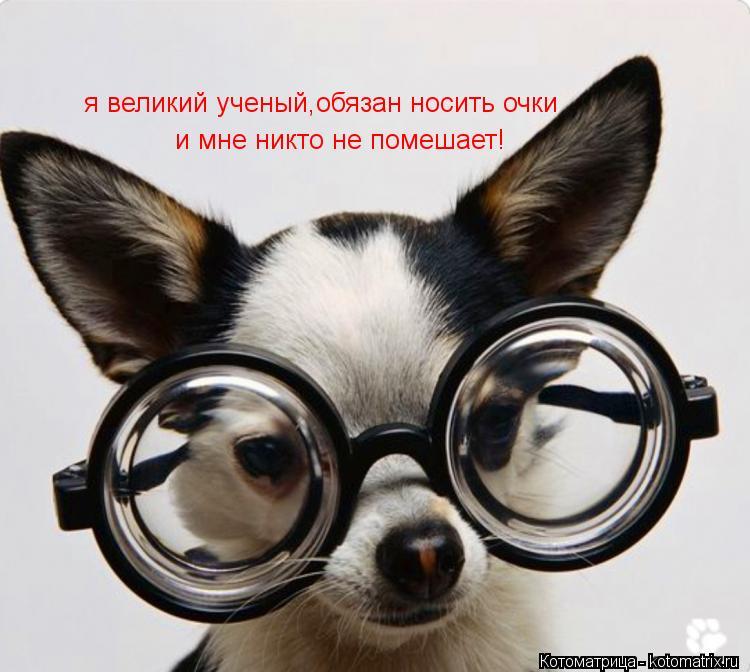 Котоматрица: я великий ученый,обязан носить очки и мне никто не помешает!