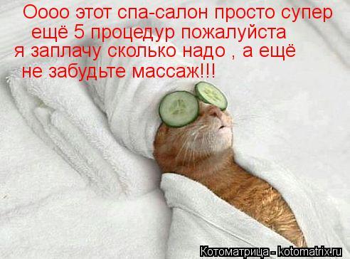 Котоматрица: Оооо этот спа-салон просто супер ещё 5 процедур пожалуйста я заплачу сколько надо , а ещё не забудьте массаж!!!