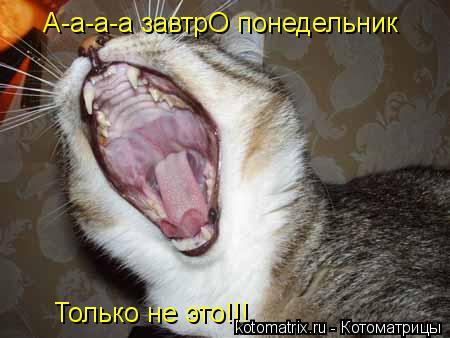 Котоматрица: А-а-а-а завтрО понедельник Только не это!!!