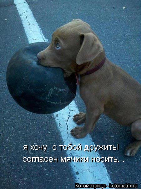 Котоматрица: я хочу  с тобой дружить! согласен мячики носить...