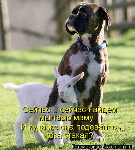 Котоматрица: Сейчас... сейчас найдем мы твою маму... коза этакая? И куда же она подевалась,