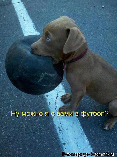 Котоматрица: Ну можно я с вами в футбол?