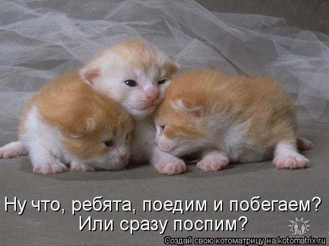 Котоматрица: Или сразу поспим? Ну что, ребята, поедим и побегаем?