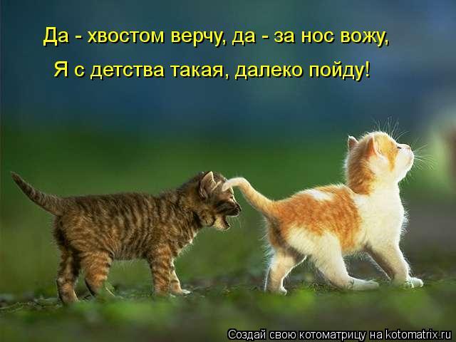 Котоматрица: Да - хвостом верчу, да - за нос вожу, Я с детства такая, далеко пойду!