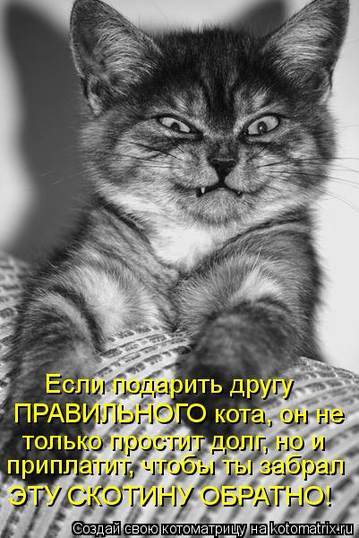 Котоматрица: Если подарить другу ПРАВИЛЬНОГО кота, он не только простит долг, но и приплатит, чтобы ты забрал ЭТУ СКОТИНУ ОБРАТНО!